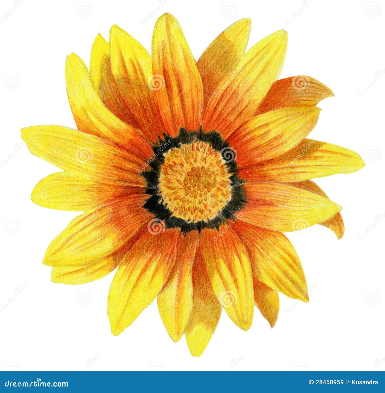 Цветок нарисованный
