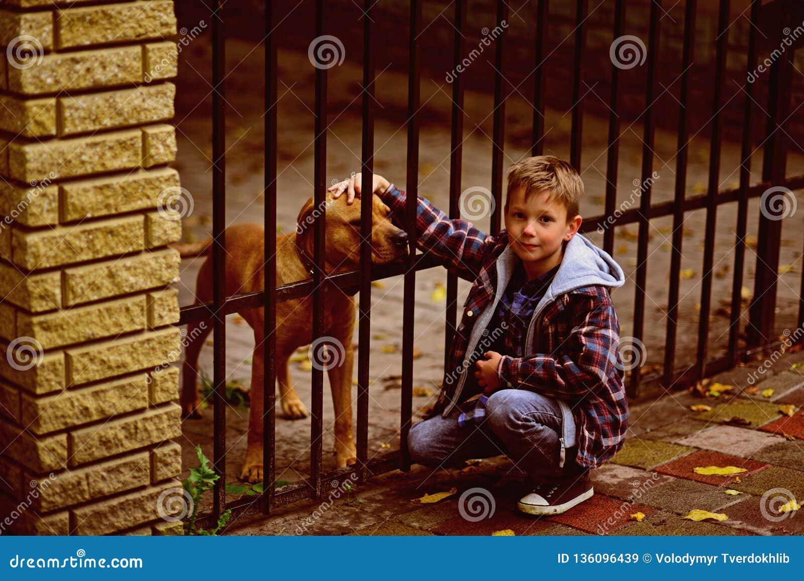 Насладитесь быть моей собакой Мальчик принимает собаку от укрытия животных Игра мальчика с собакой Вы наклоненная влюбленность по