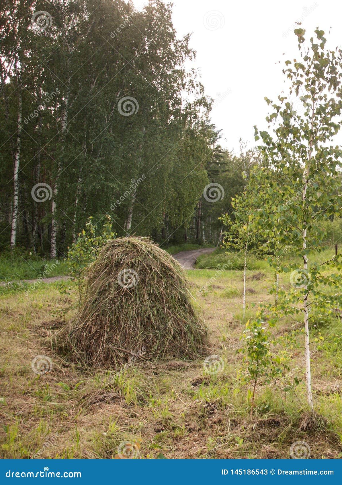 Насыпь сена Раннее лето