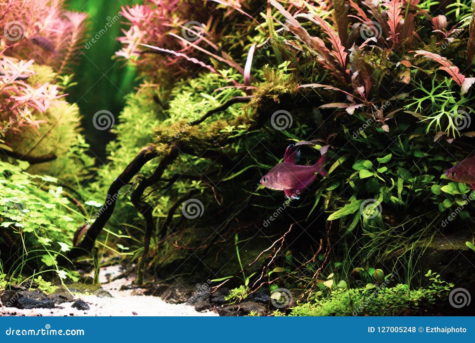 Натюрморт близкий вверх красивого тропического scape aqua, природы Aqu