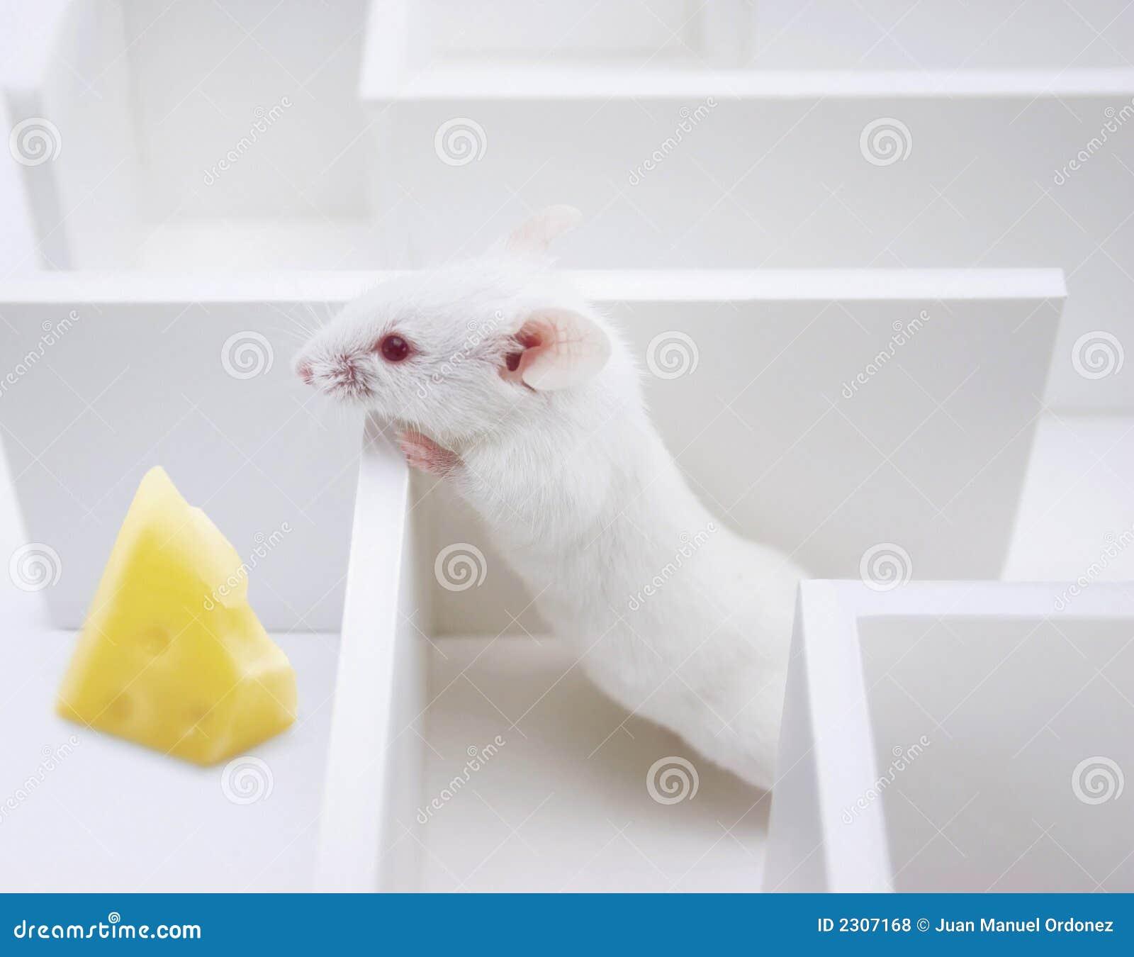 находить сыра