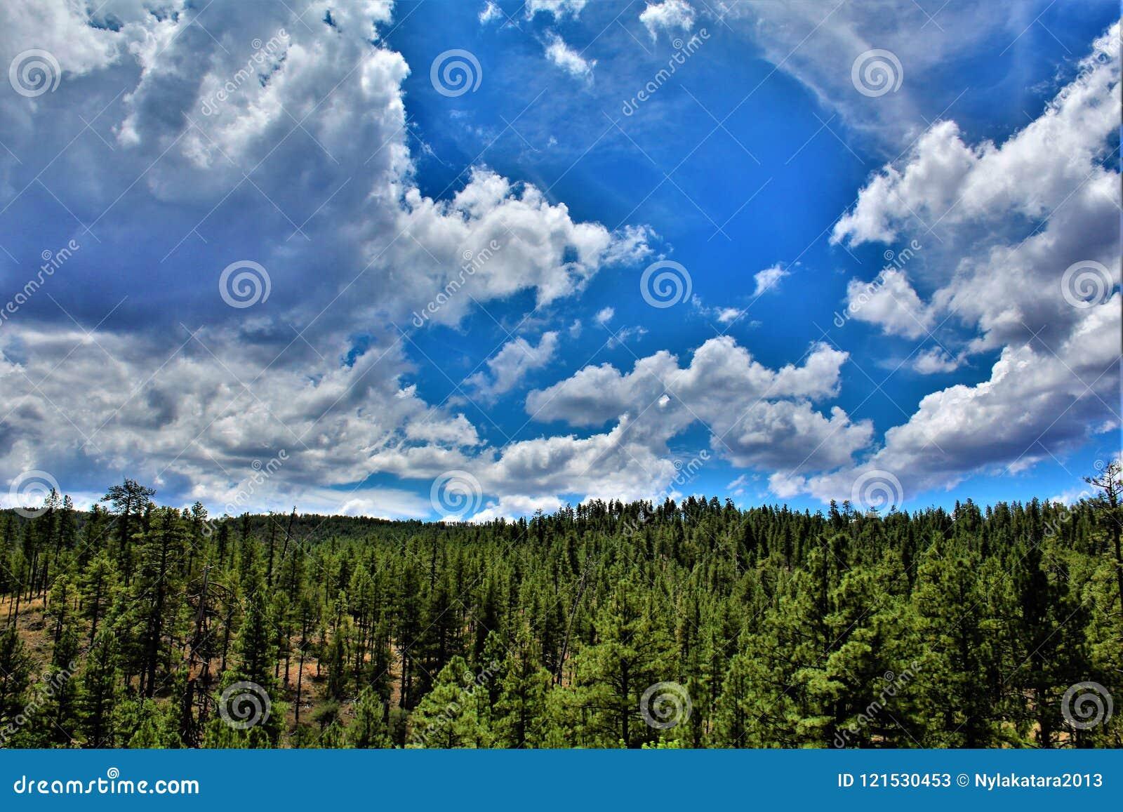 Национальный лес Tonto, министерство сельского хозяйства Аризоны, Соединенных Штатов