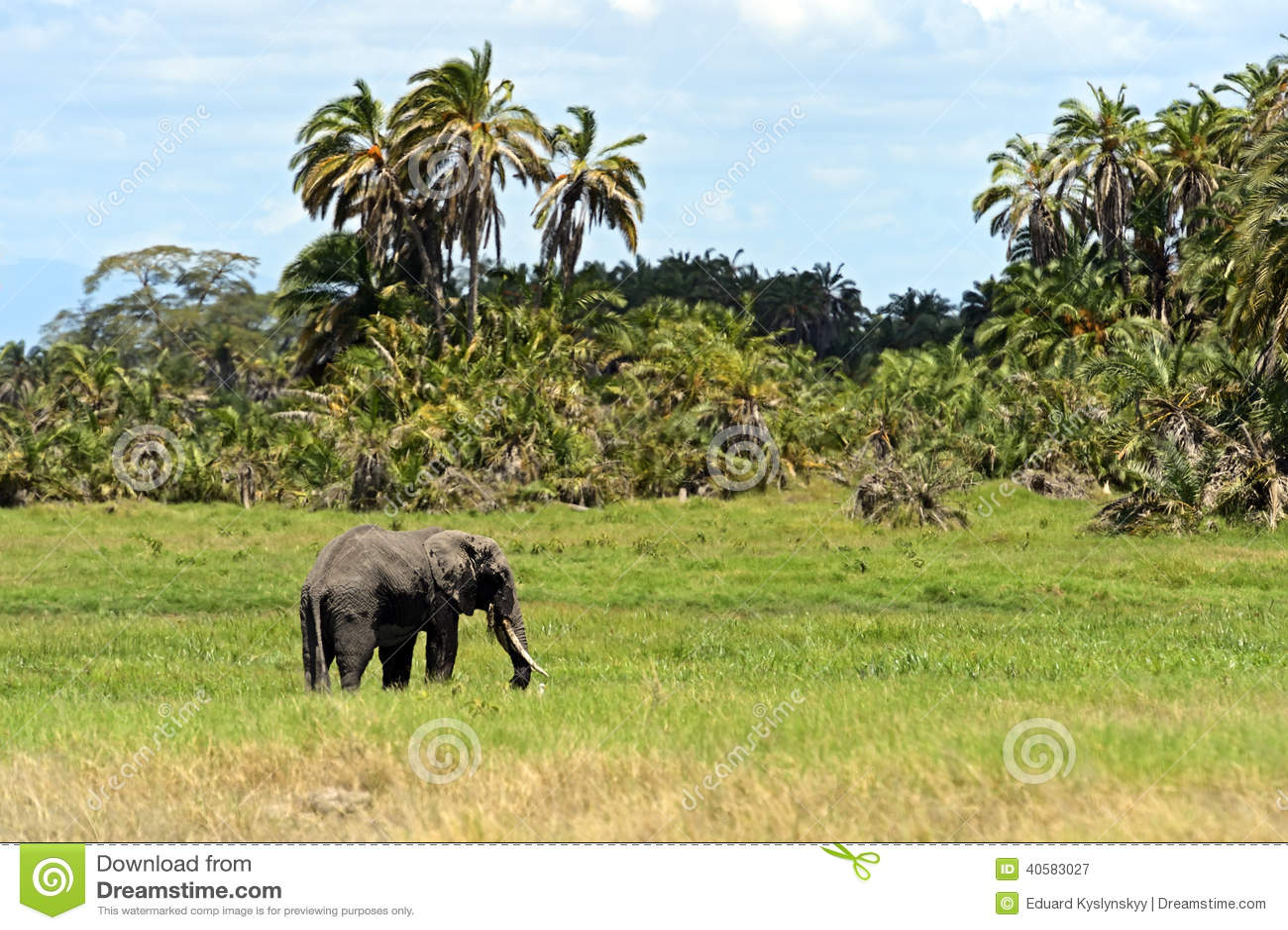 Национальный парк Amboseli