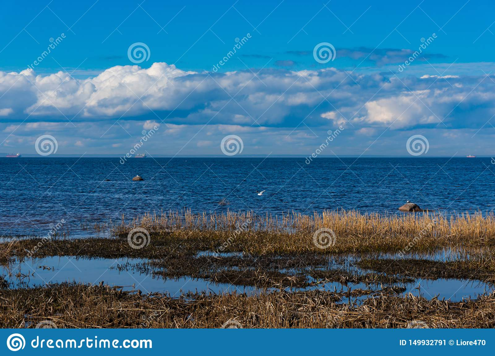 На береге Gulf of Finland в предыдущей весне на ясный солнечный день Весна на заливе Южное побережье Gulf of Finland