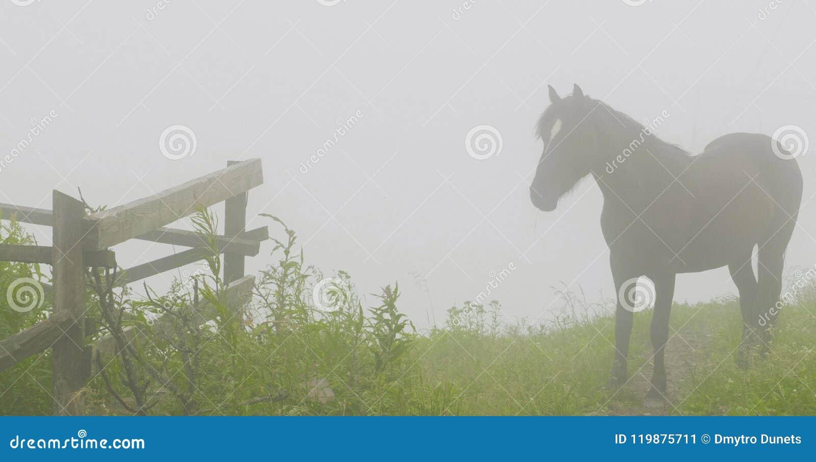 На верхней части горы лошадь