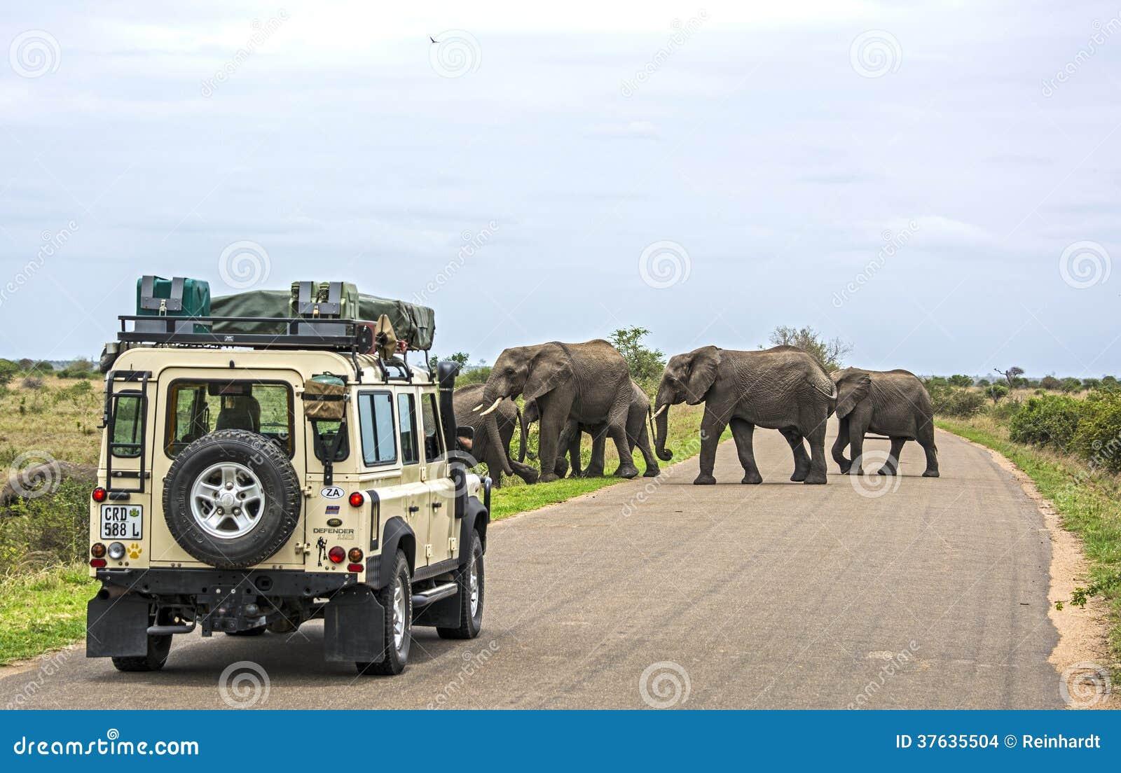 На сафари в Африке