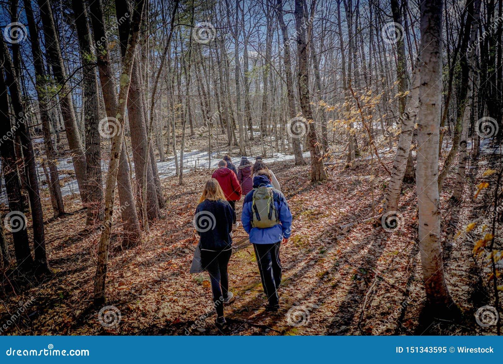 Небольшая группа hikers идя в лес на зиме
