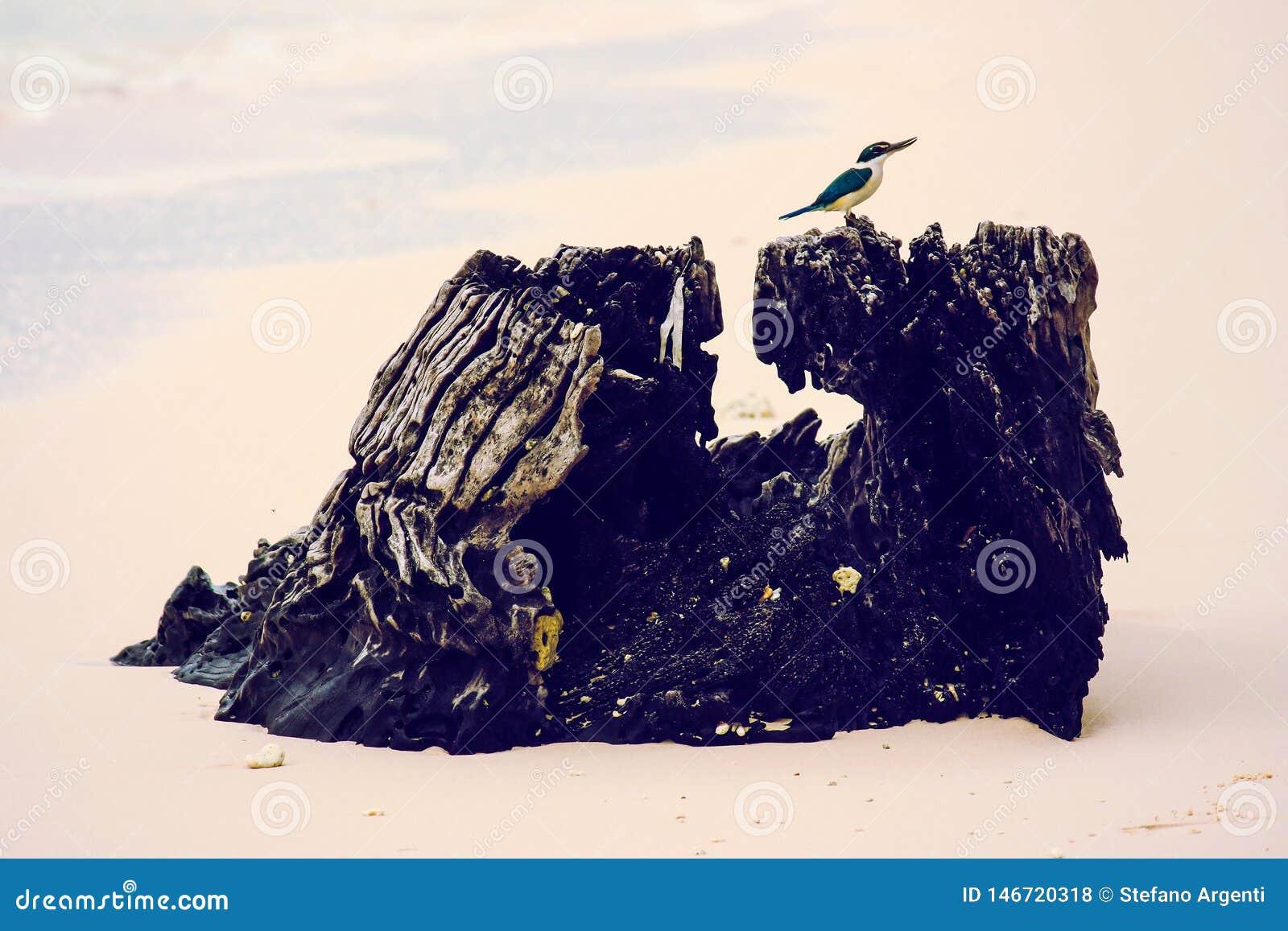 Небольшая птица садить на насест на стволе дерева на пляже