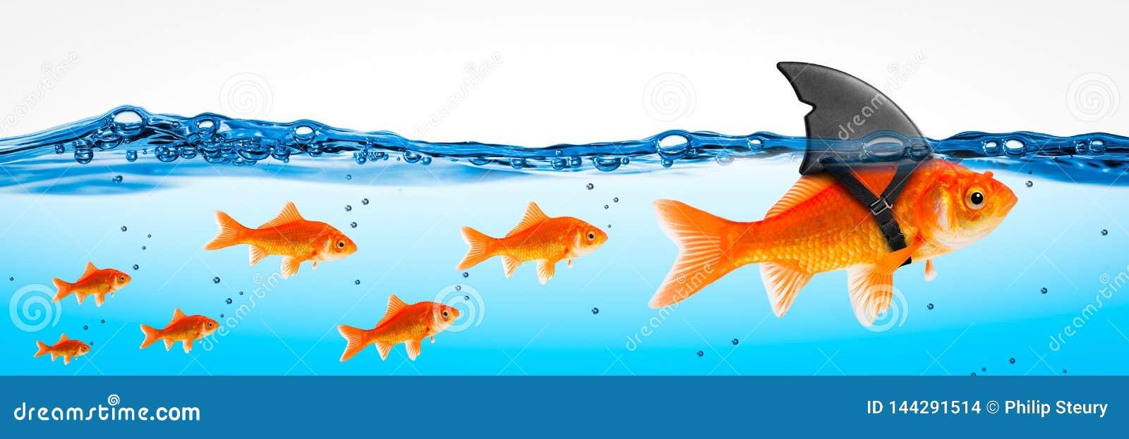 Небольшой храбрый руководитель рыбки