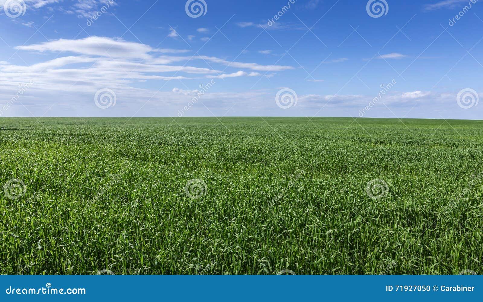 небо зеленого цвета травы поля