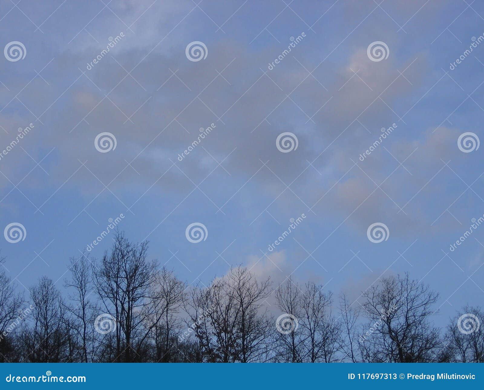 Небо над лесом