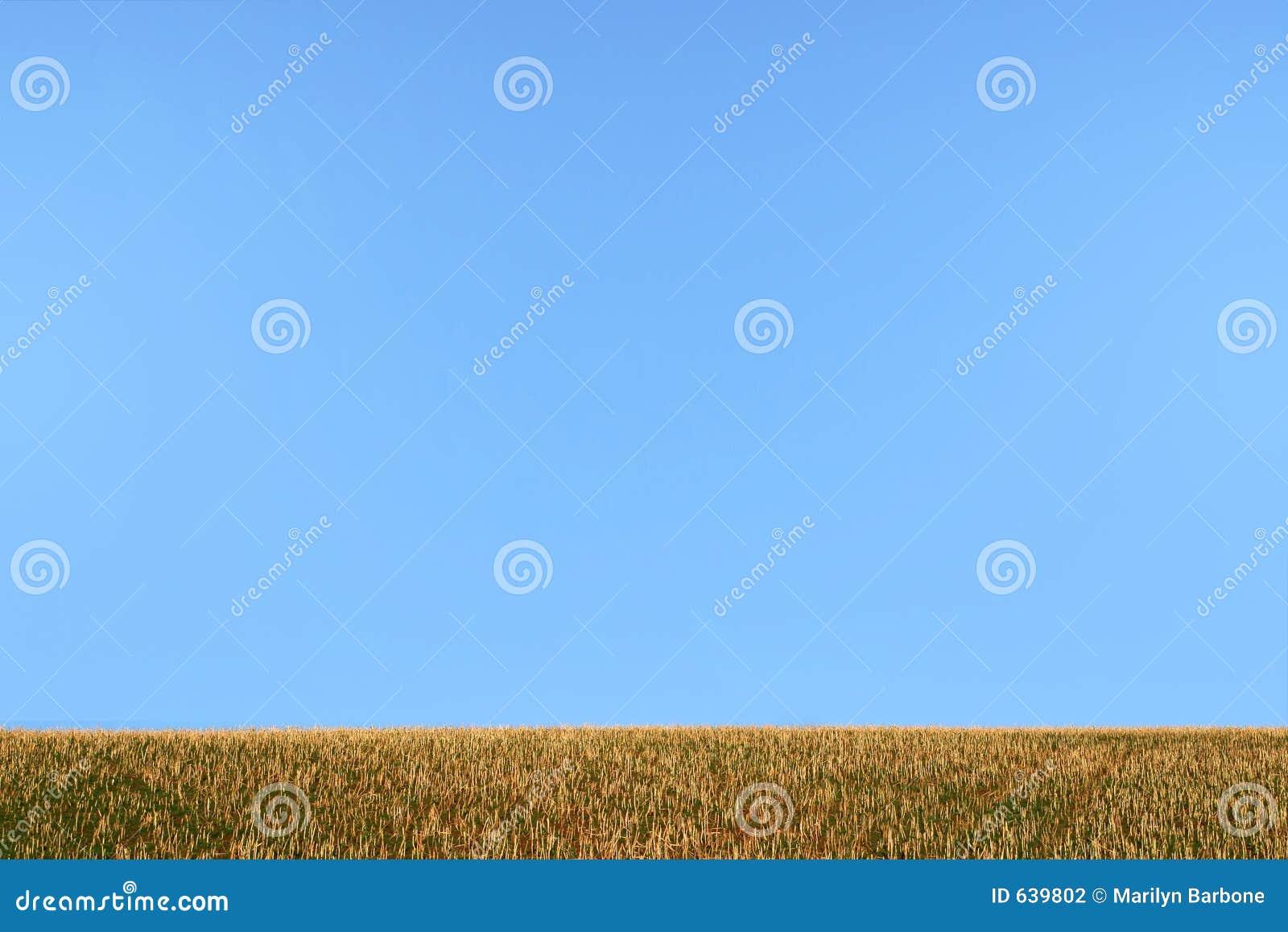 Download небо травы стоковое фото. изображение насчитывающей daytime - 639802