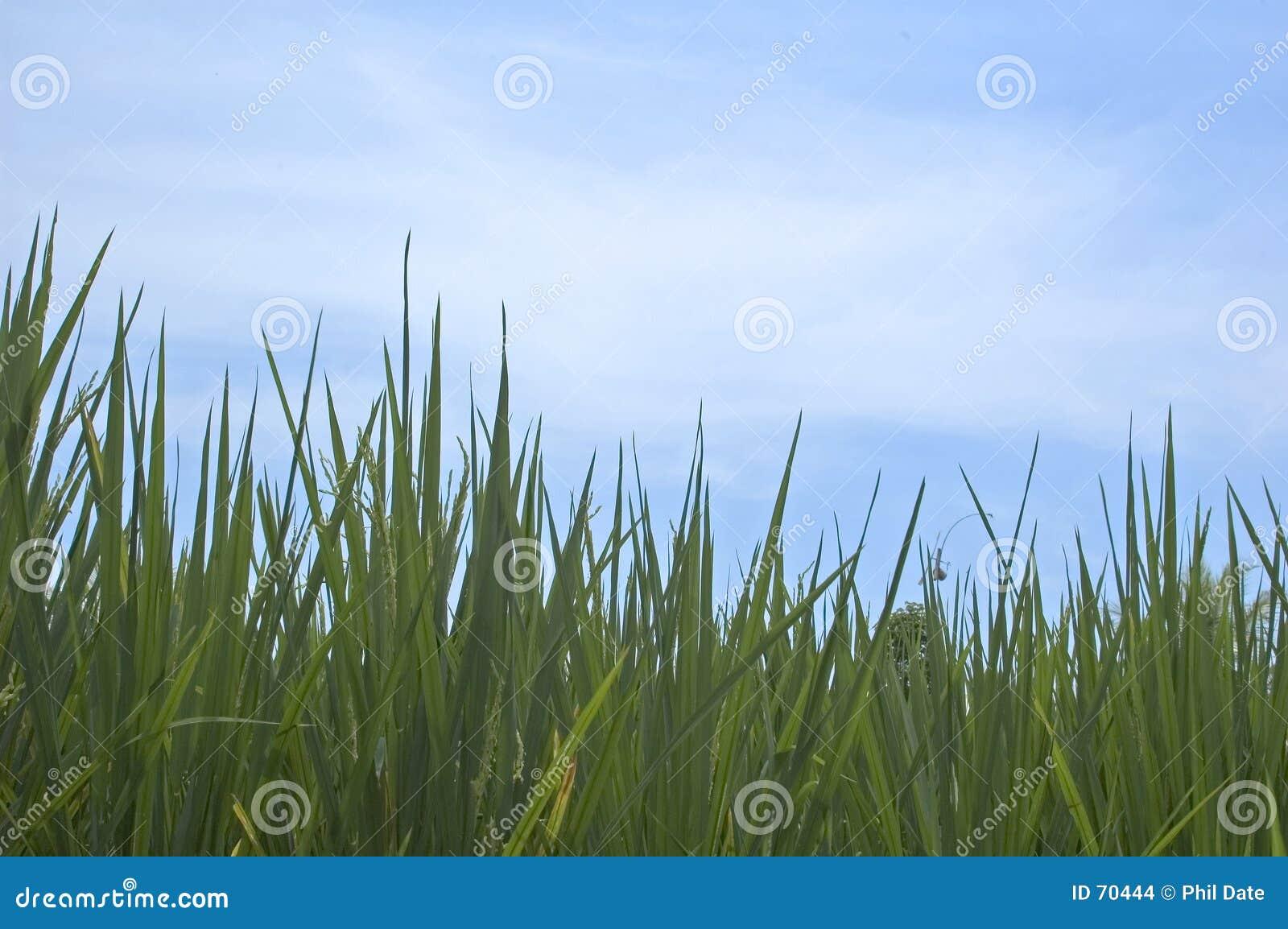 небо травы