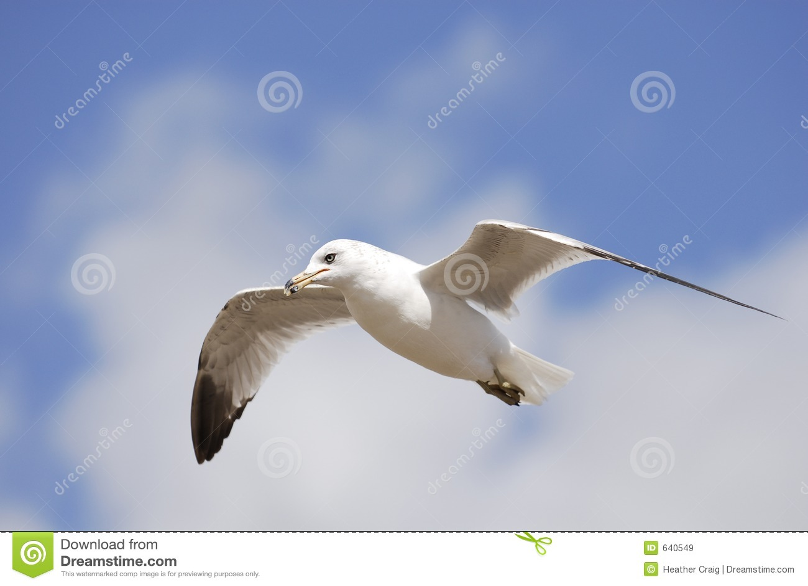 Download небо 2 чаек стоковое изображение. изображение насчитывающей полет - 640549