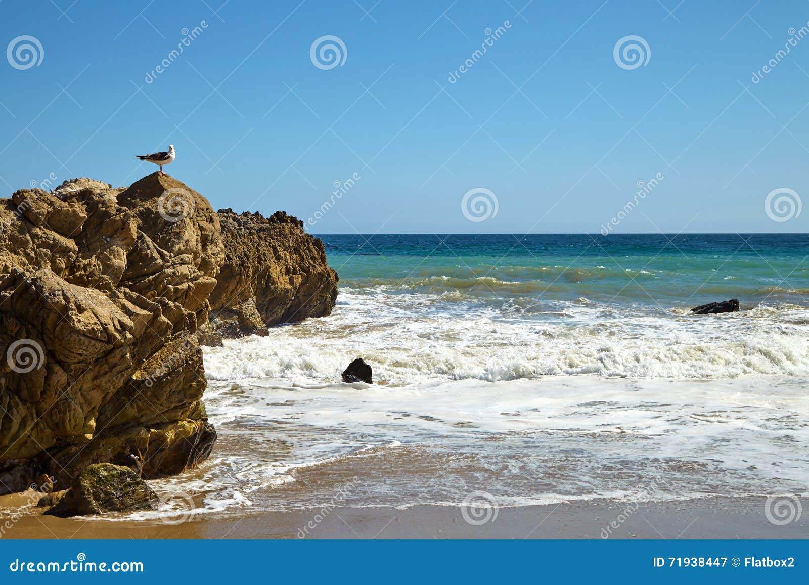 небо seascape чайки утеса природы предпосылки сидя