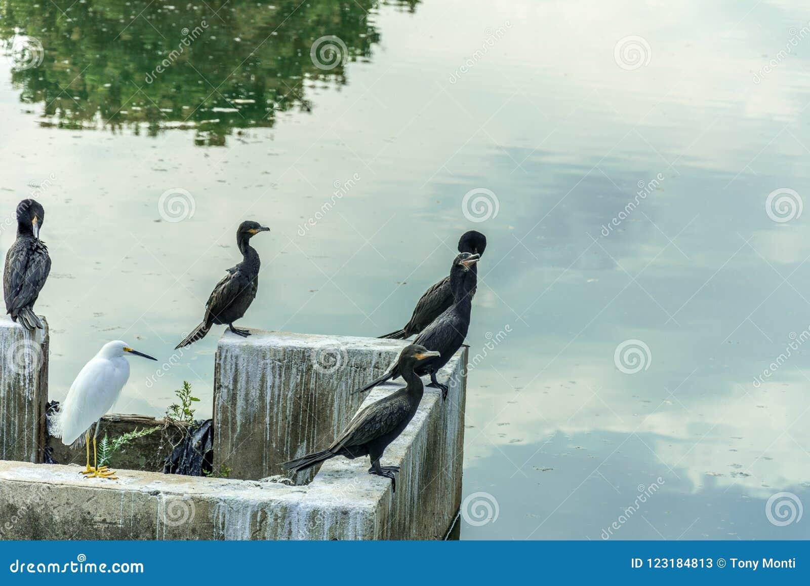 Некоторая черная птица стояла вверх в фронте waterflow отражая небо