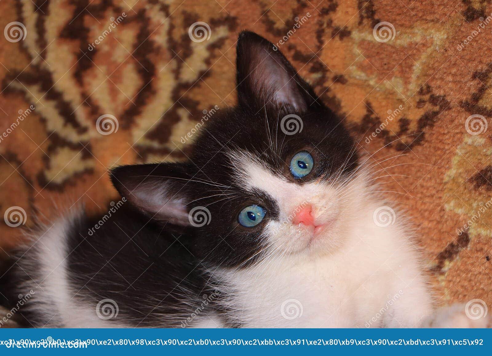 Немногое вспугнутый котенок