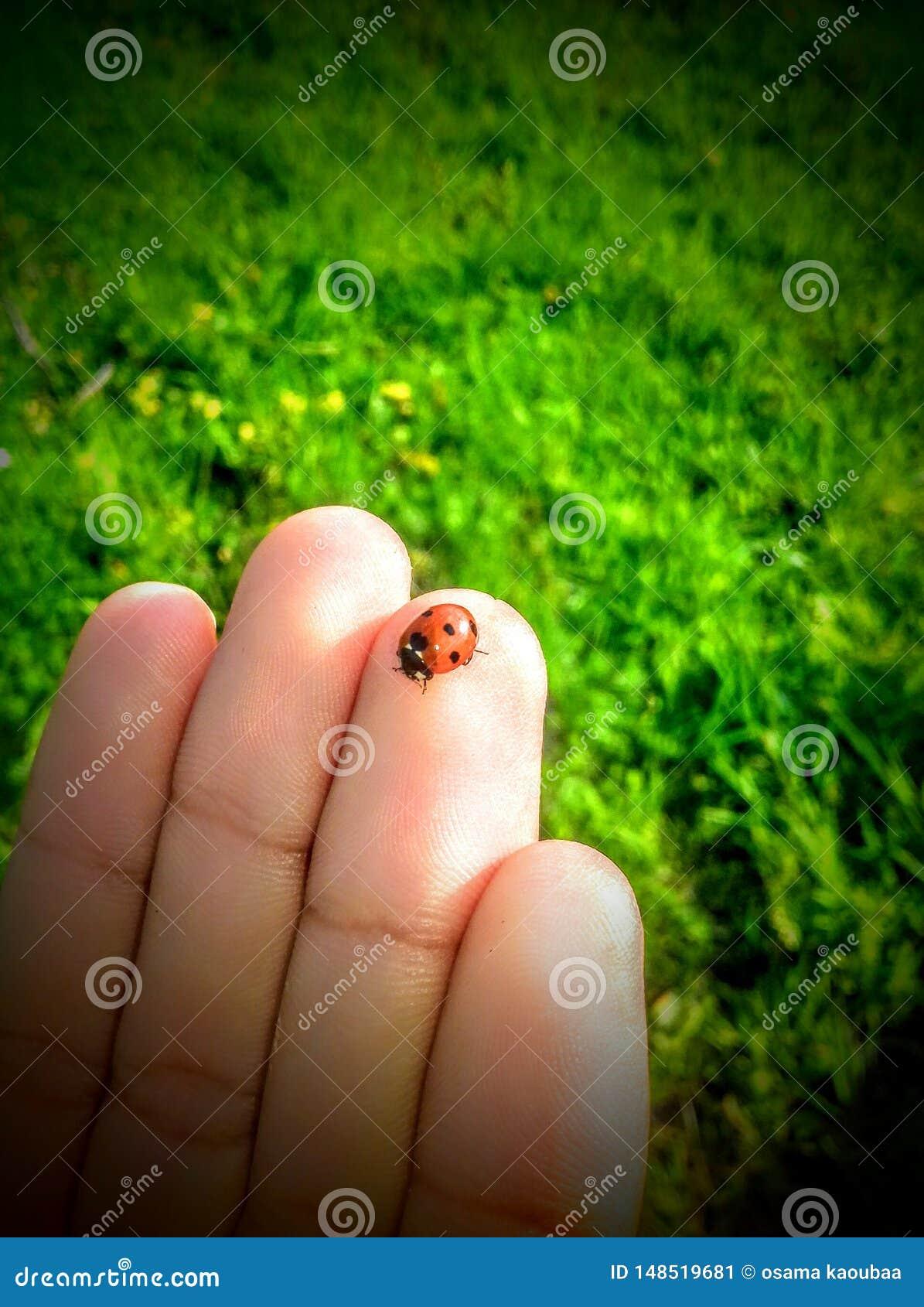 Немногое жук