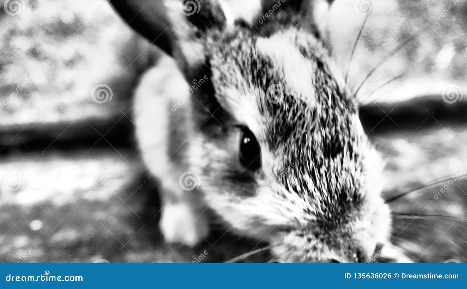 Немногое милый зайчик обнюхивая для еды на ферме