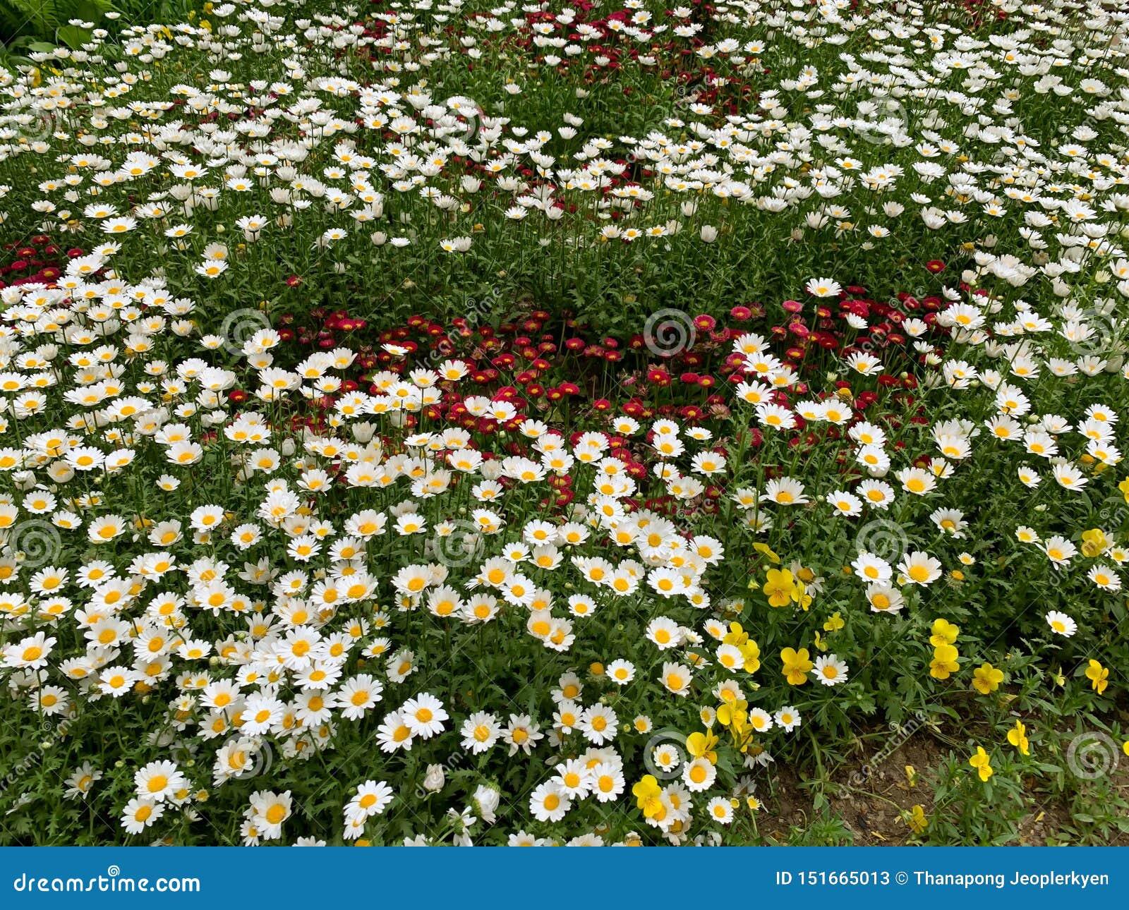 Немногое цветет предпосылка