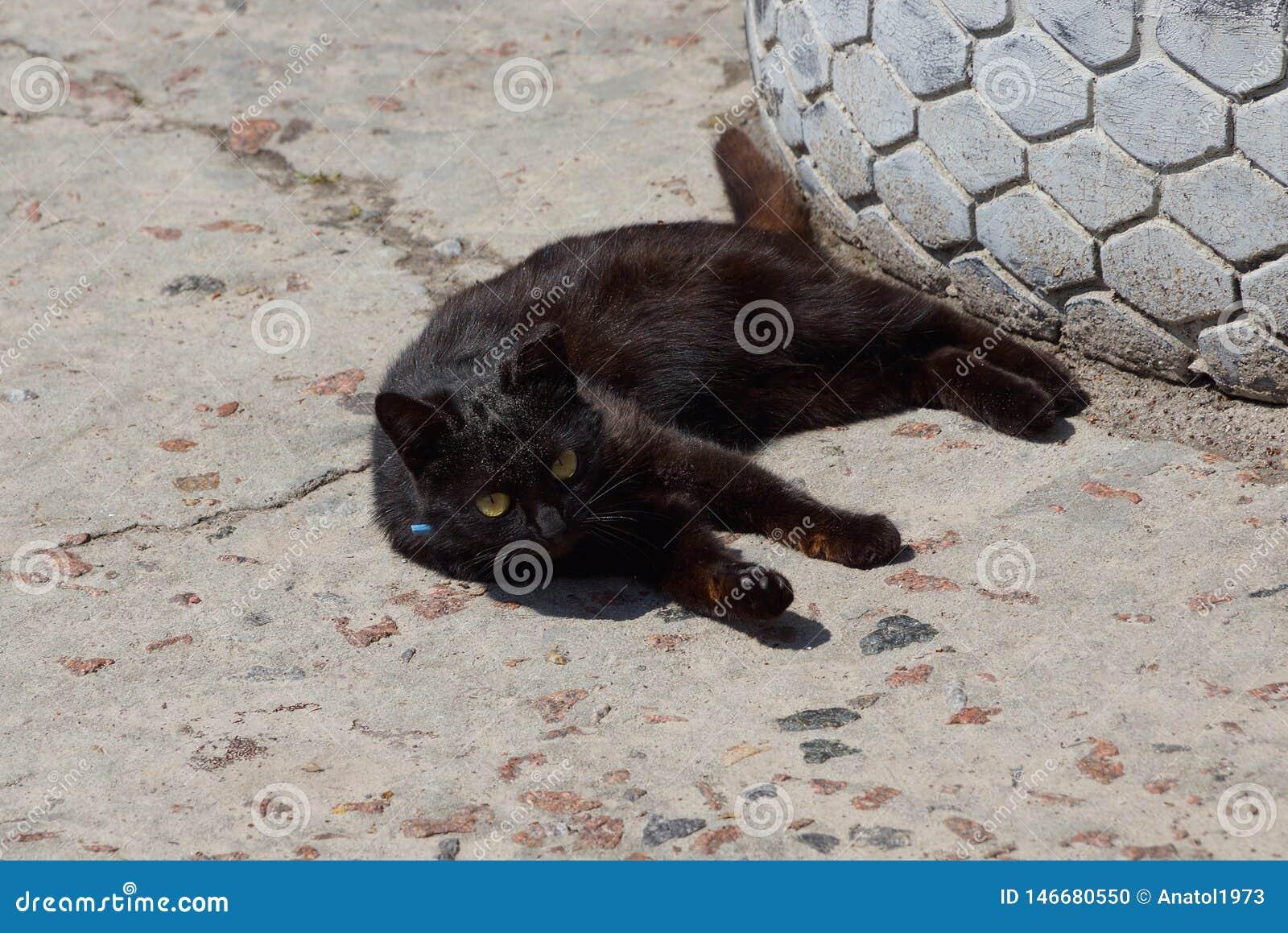 Немногое черный кот лежит и смотрит на серой грязной дороге в улице