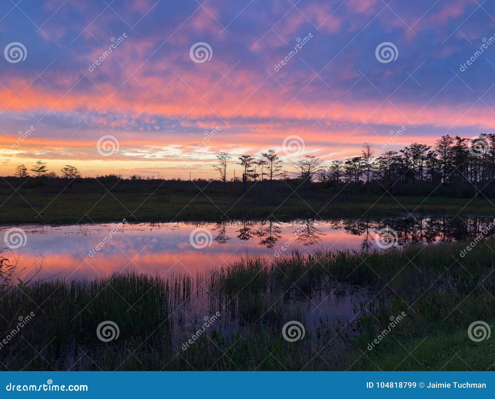 неоновый заход солнца в поле и 2 деревьях