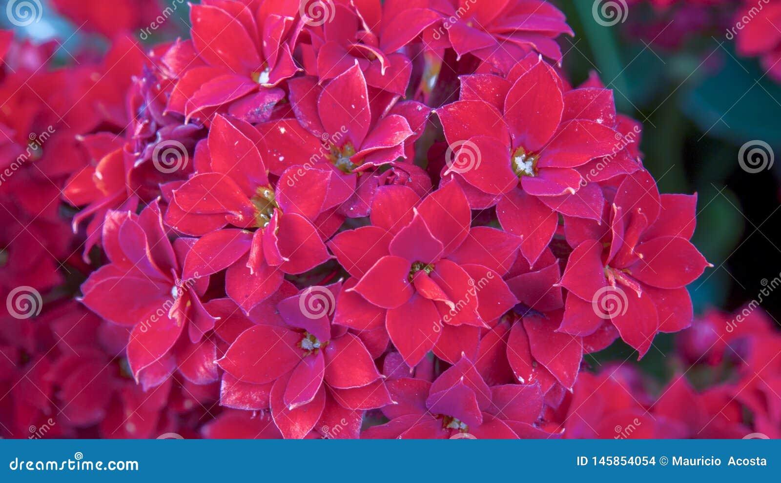 Неопознанные интенсивные красные маленькие цветки