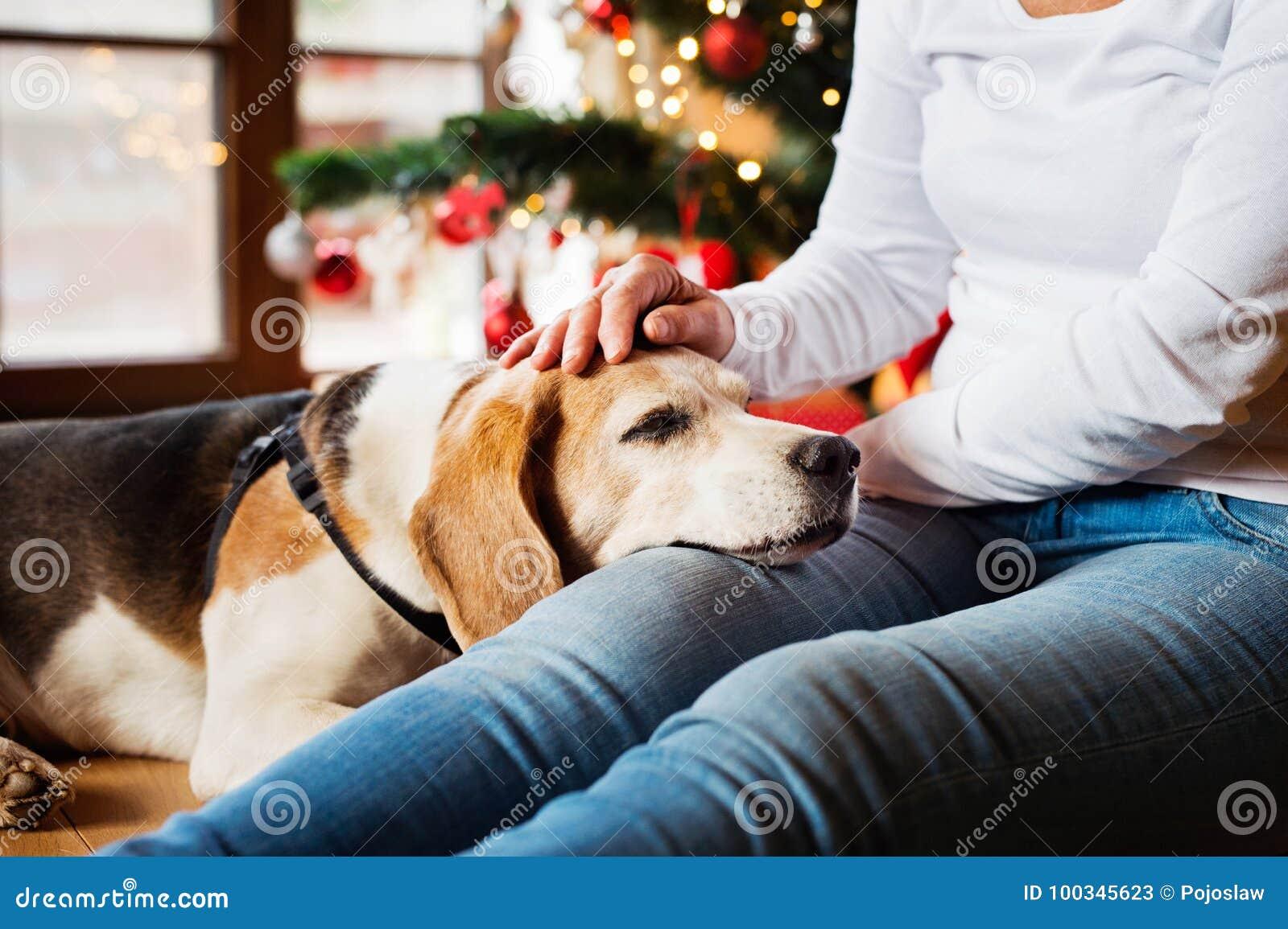 Непознаваемая старшая женщина с ее собакой на рождественской елке