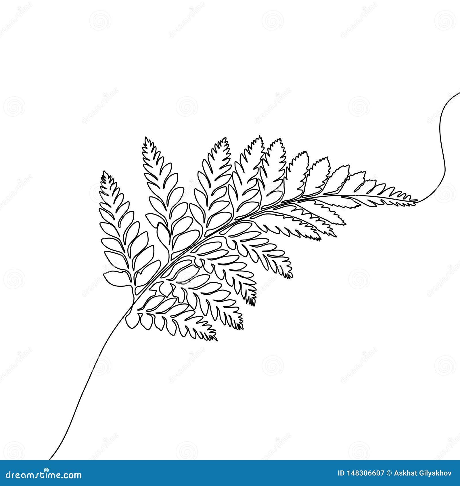Непрерывная одна линия папоротник чертежа, экзотический тропический завод