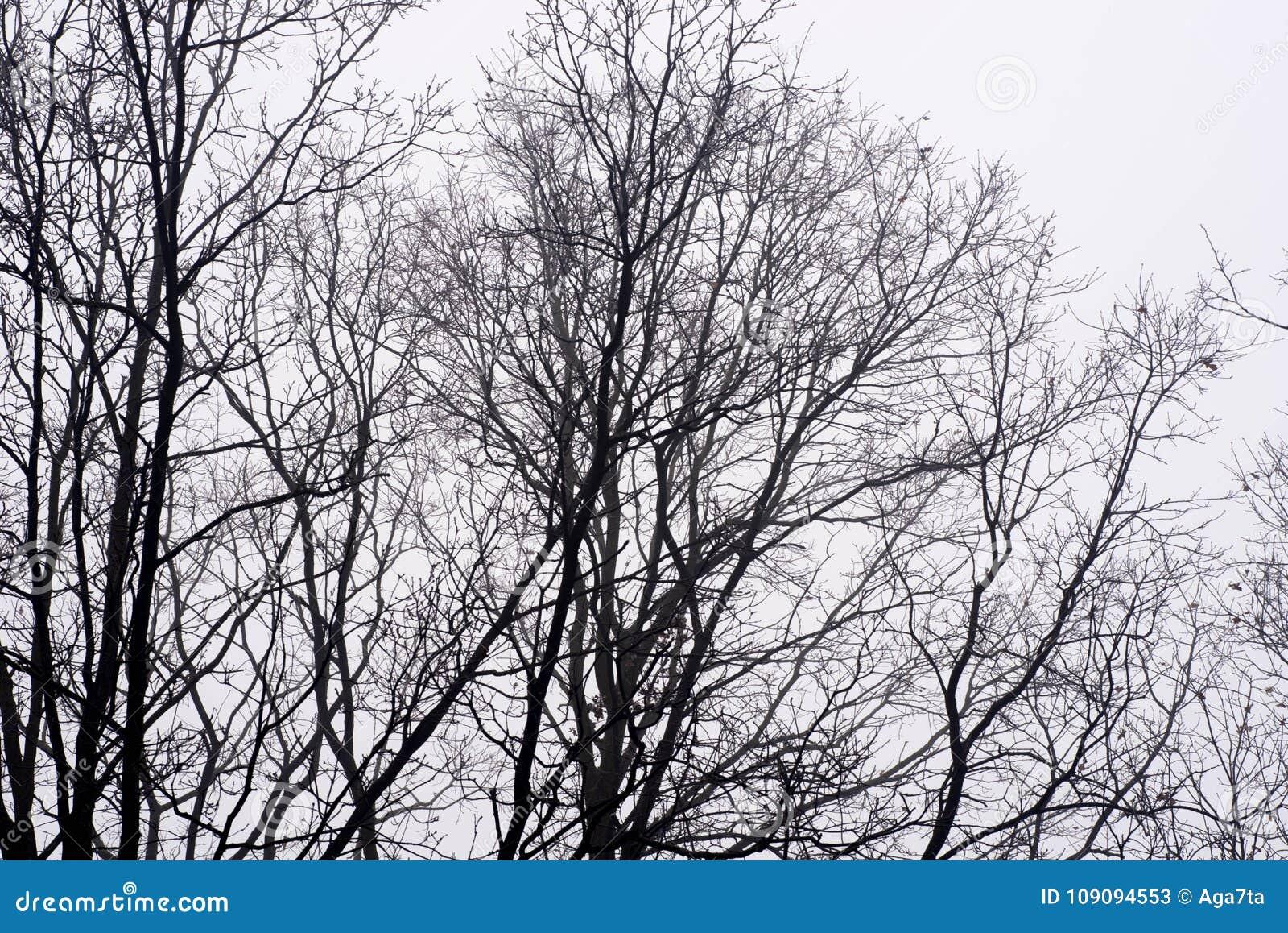 Неурожайные ветви дерева против неба на туманном утре