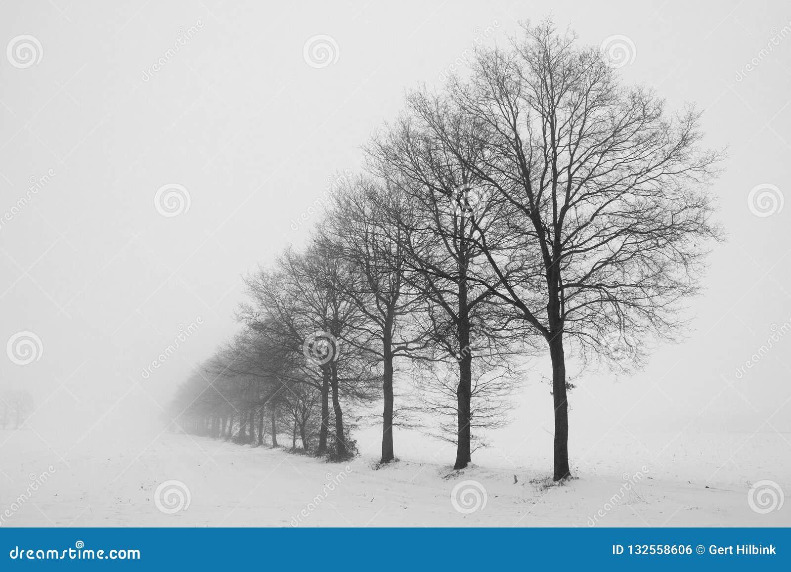 Нидерланд, ландшафты и мельницы в wintertime