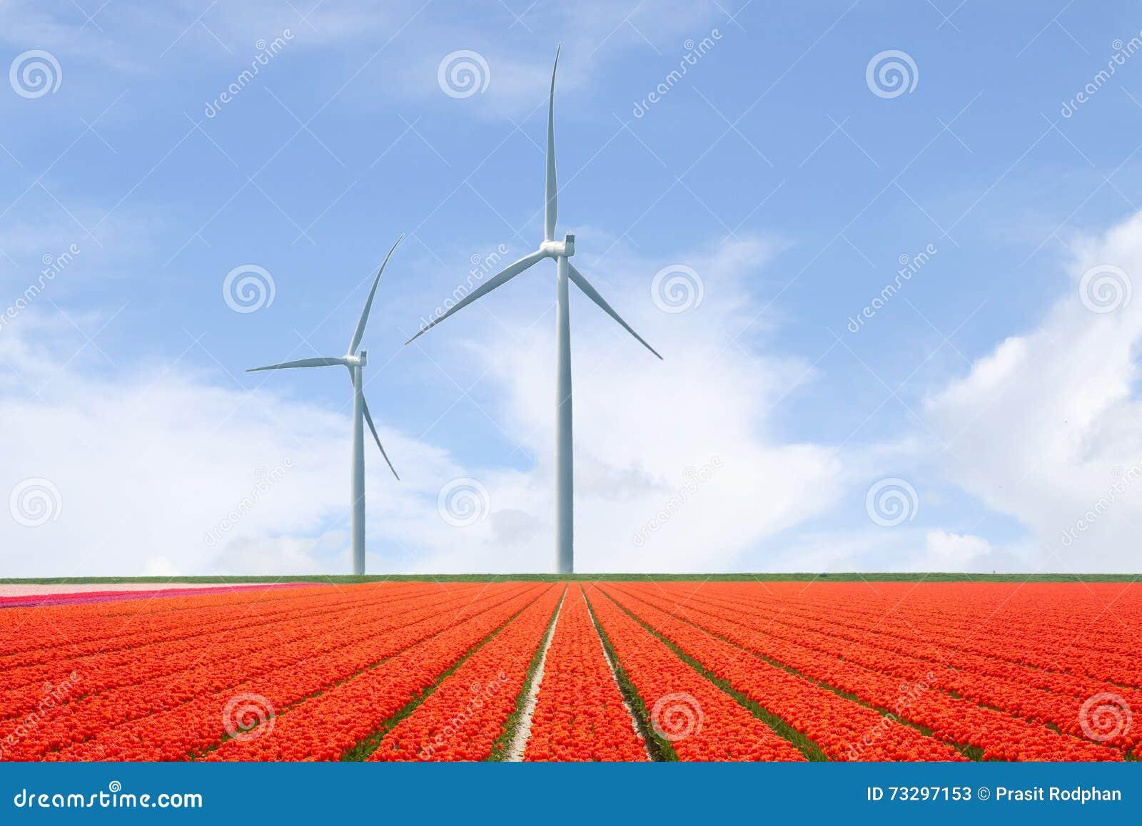 Нидерландский ландшафт с тюльпанами и ветротурбинами