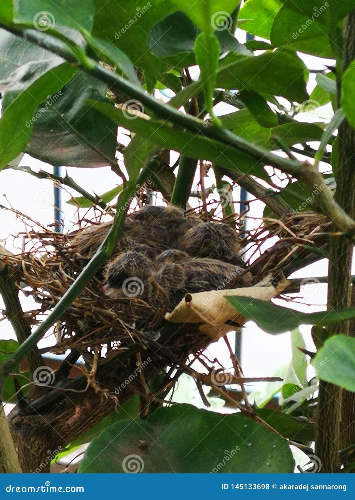 Новорожденный голубя