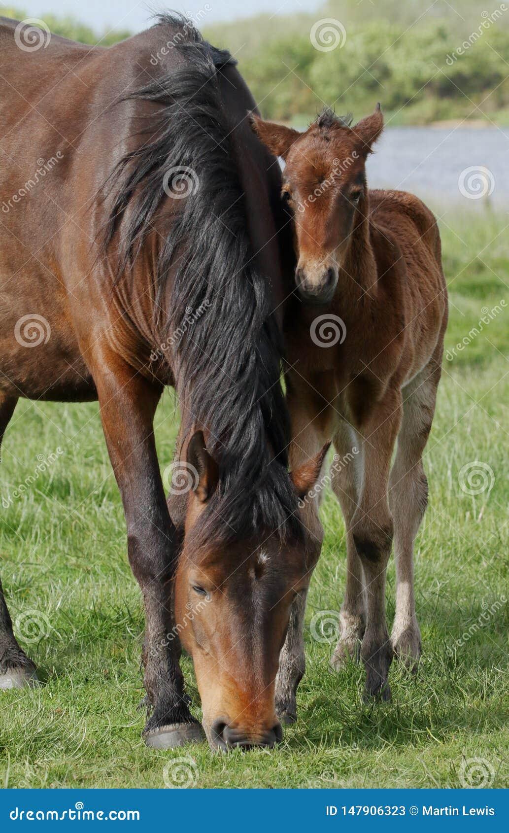 Новые пони и осленок леса