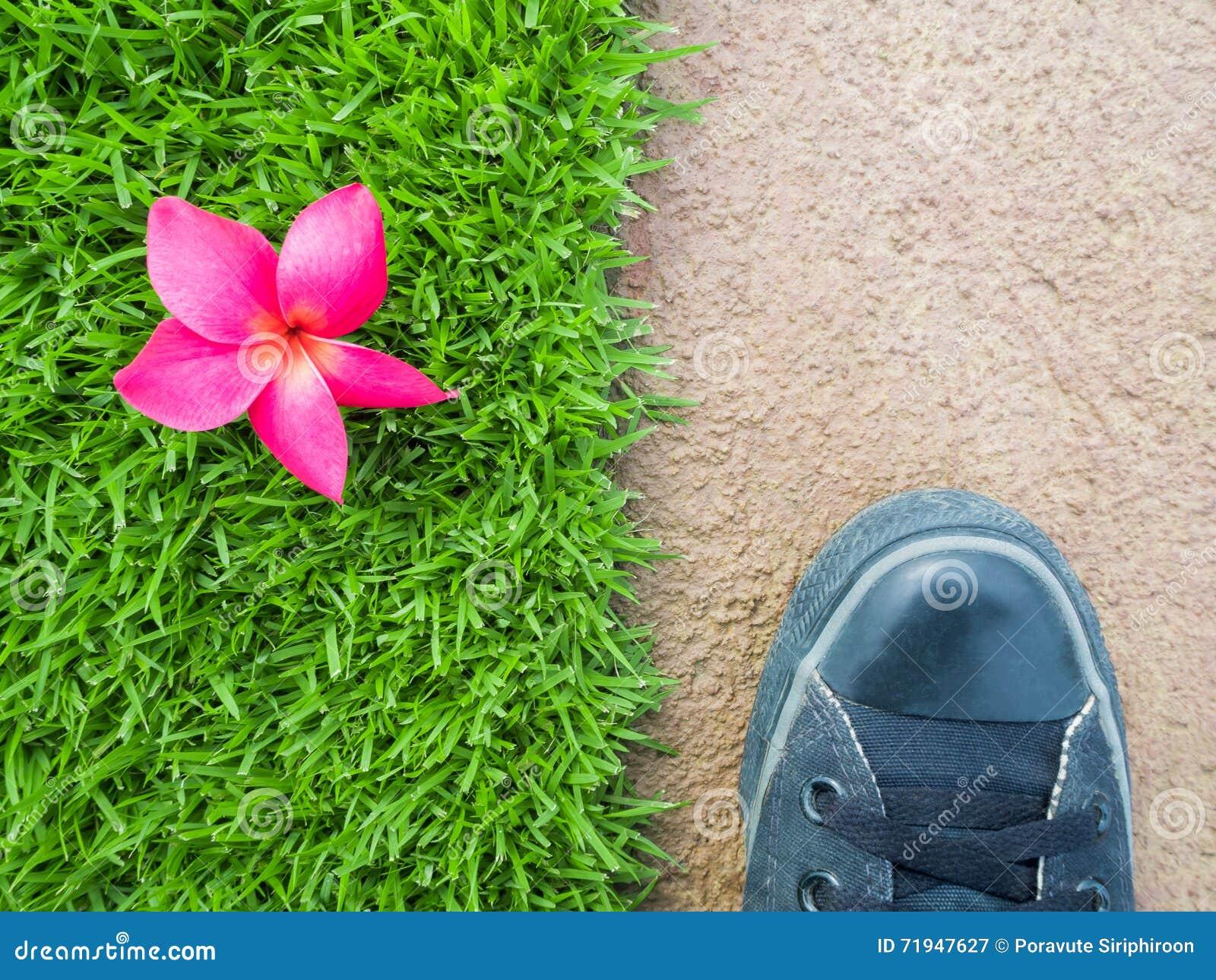 Ноги на поле между цветком на лужайке