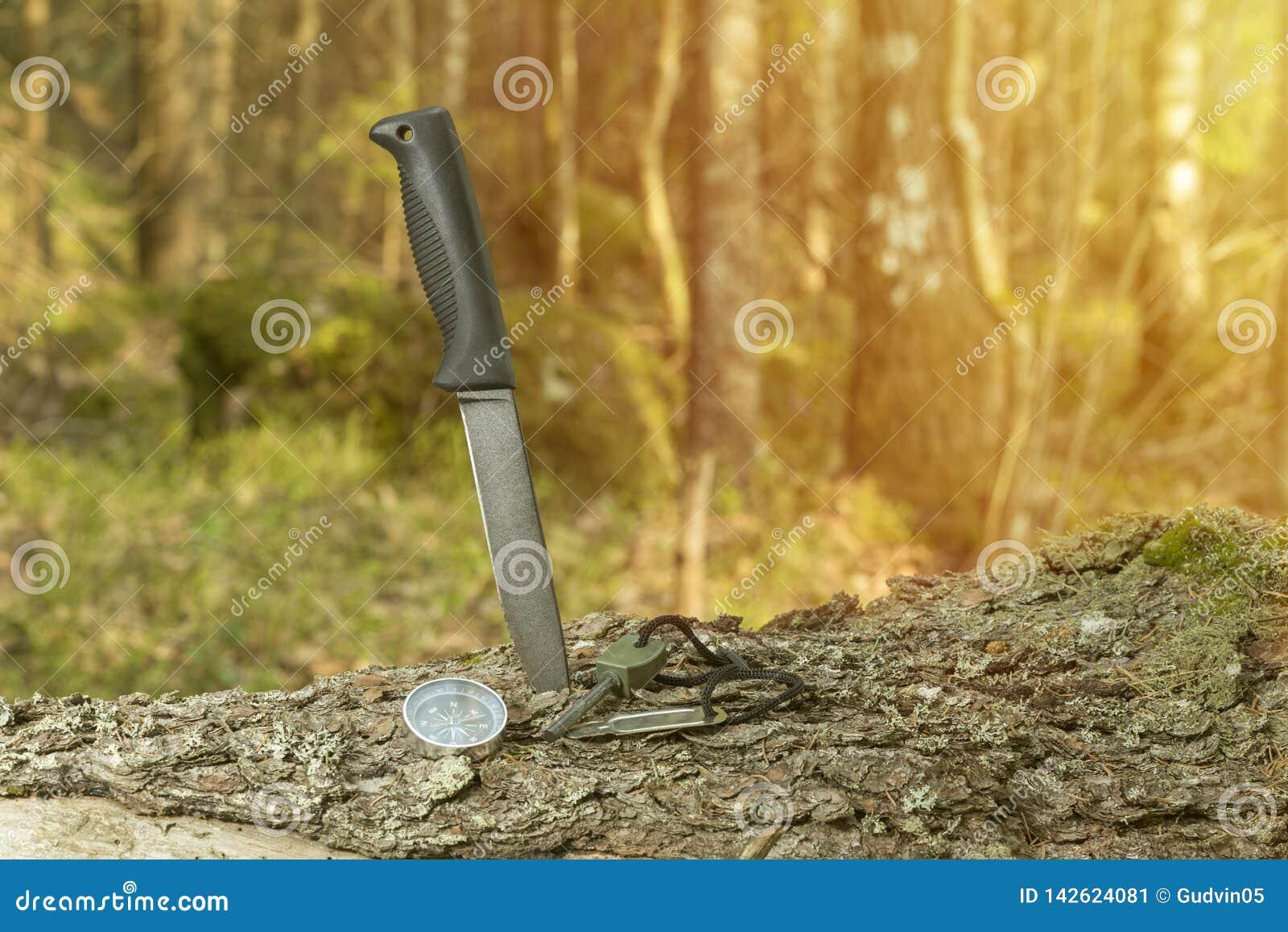 Нож, компас и огниво на пне в лесе