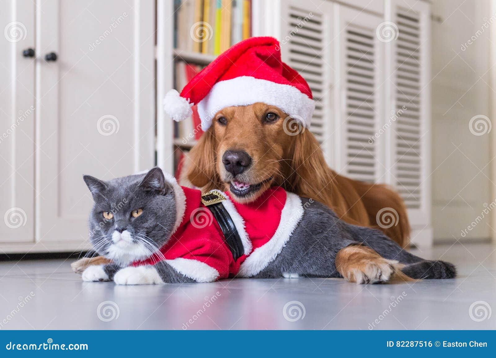 Носить шляпу рождества собак и кошек