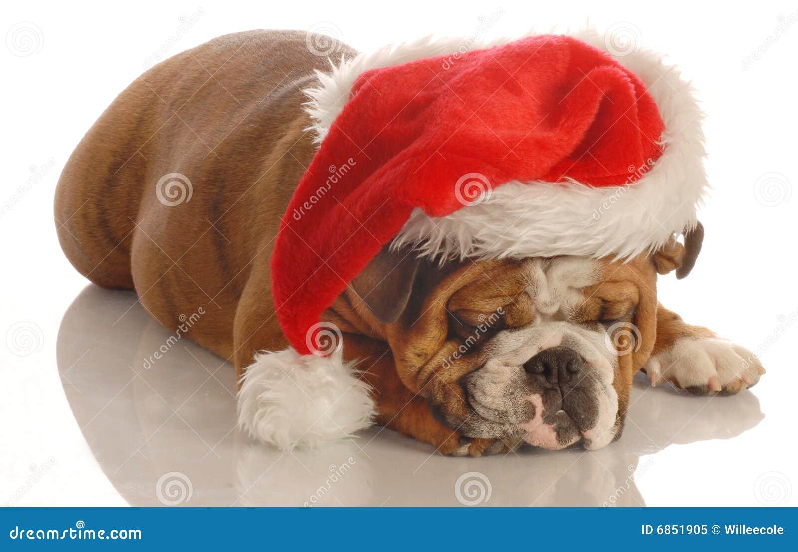 носить santa шлема собаки
