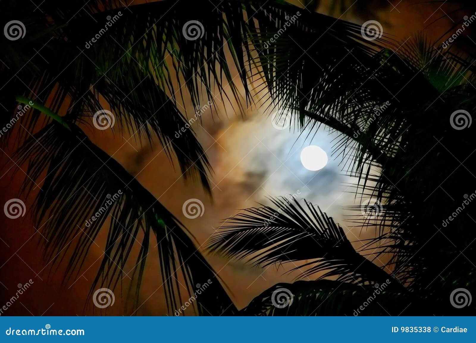 ноча тропическая