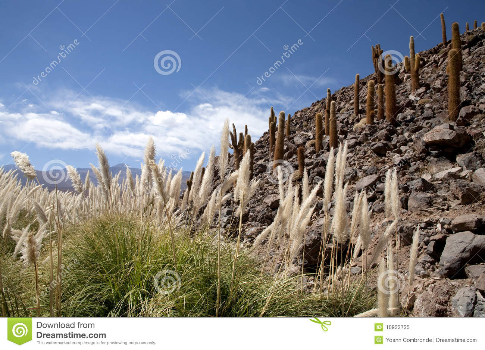 оазис пустыни atacama
