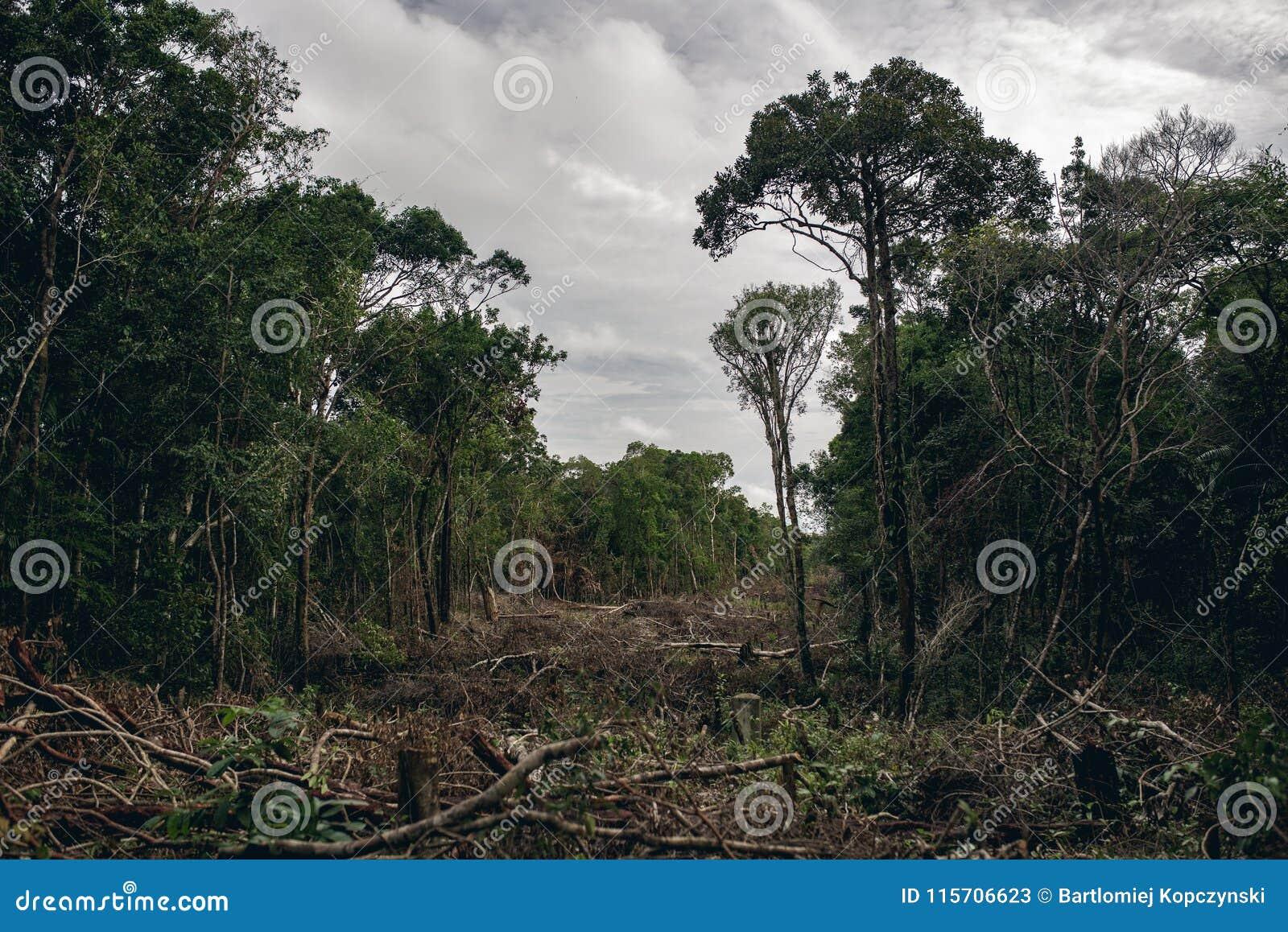 Обезлесение тропического леса