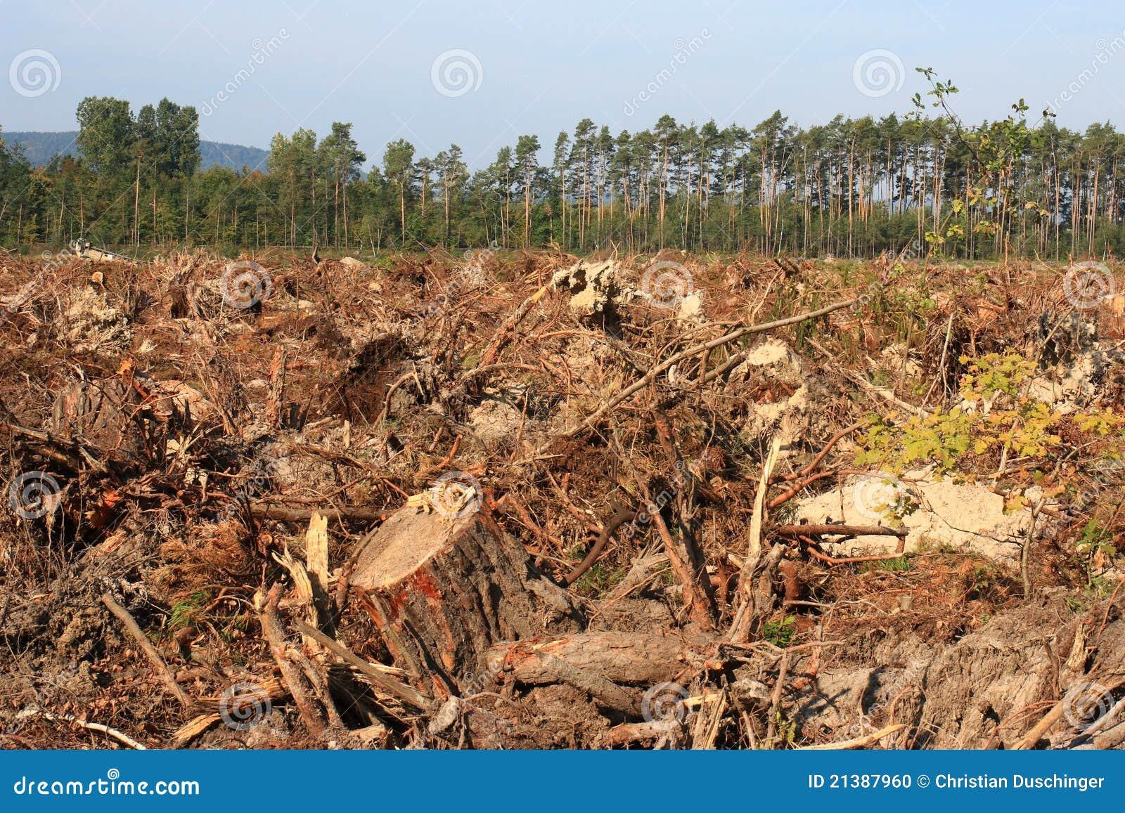 обезлесение