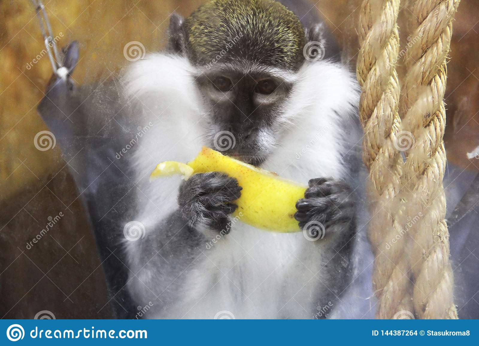 Обезьяна есть банан