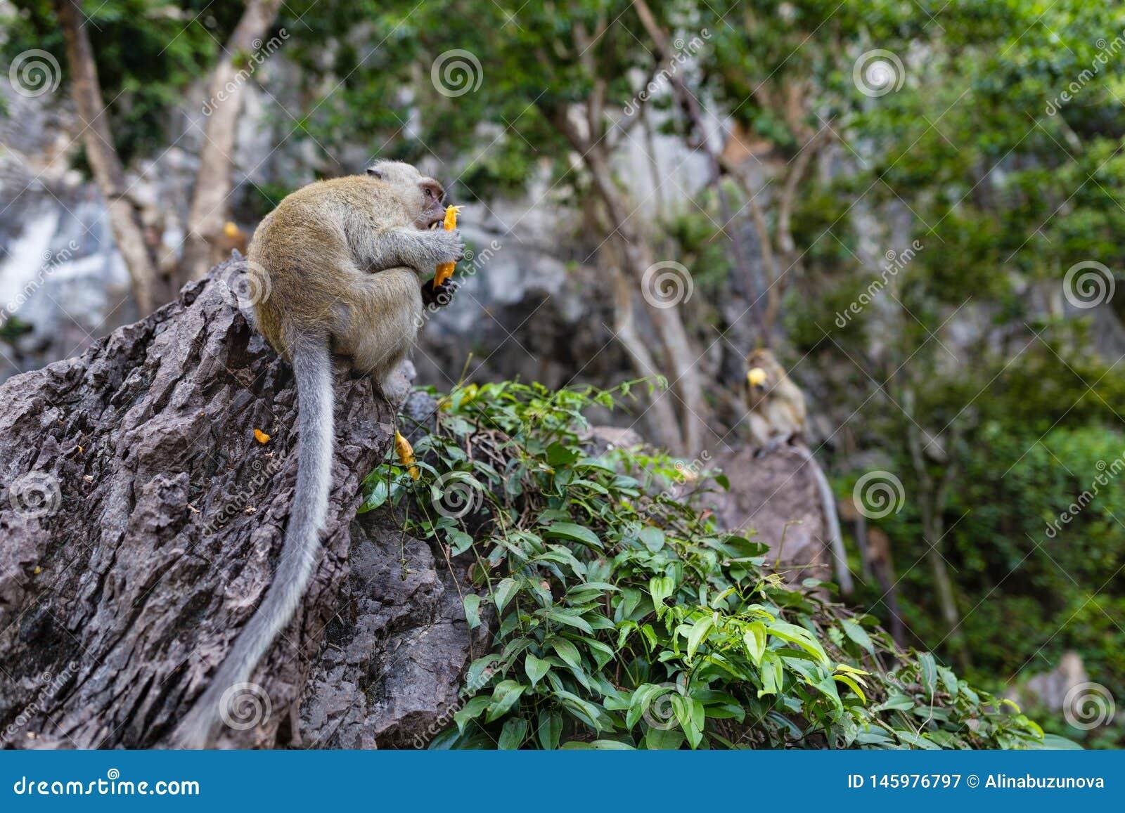 Обезьяна есть свежие фрукты на открытом воздухе Животное Таиланда