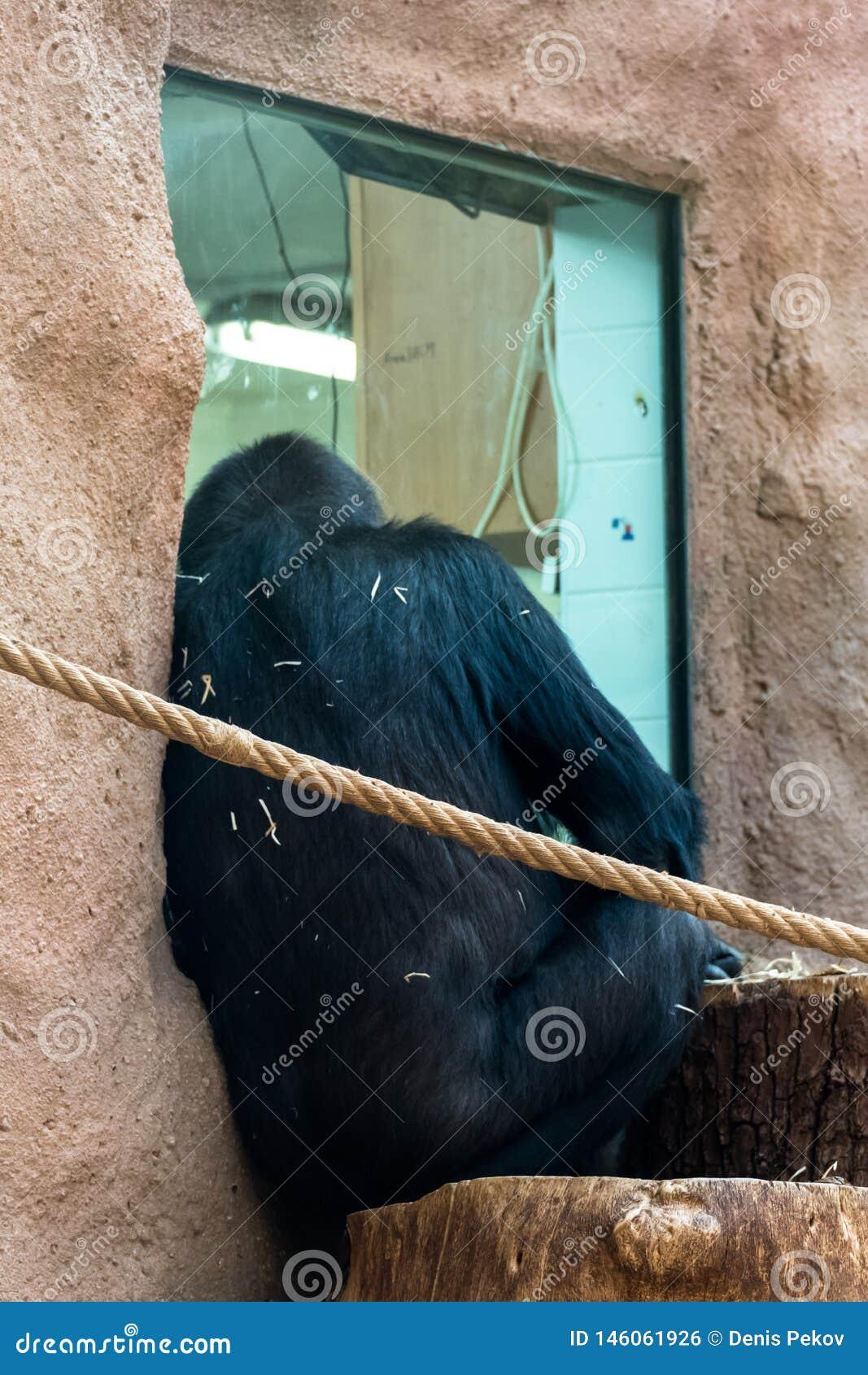 Обезьяна на зоопарке