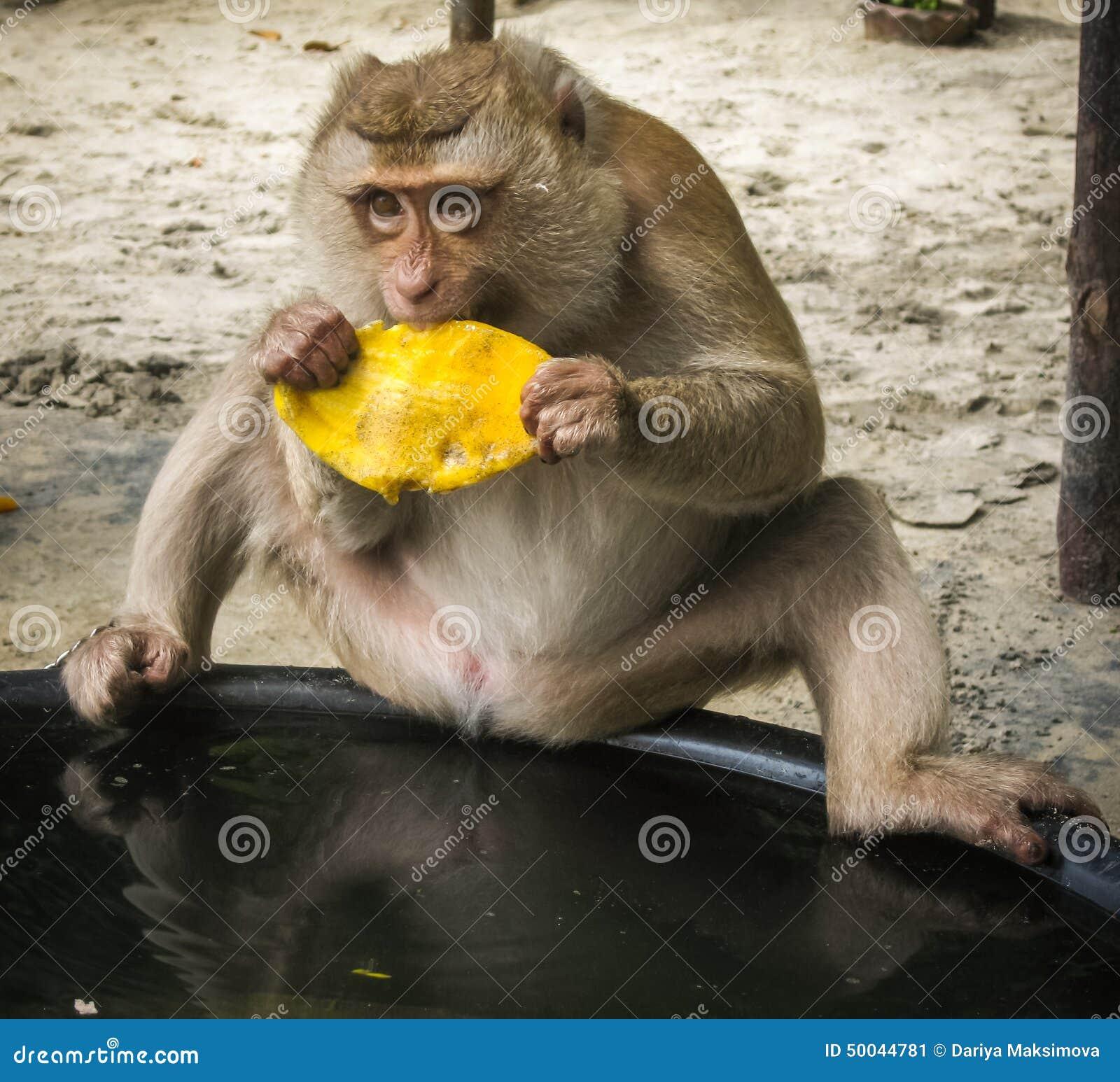 Фото обезьян на пляже 19