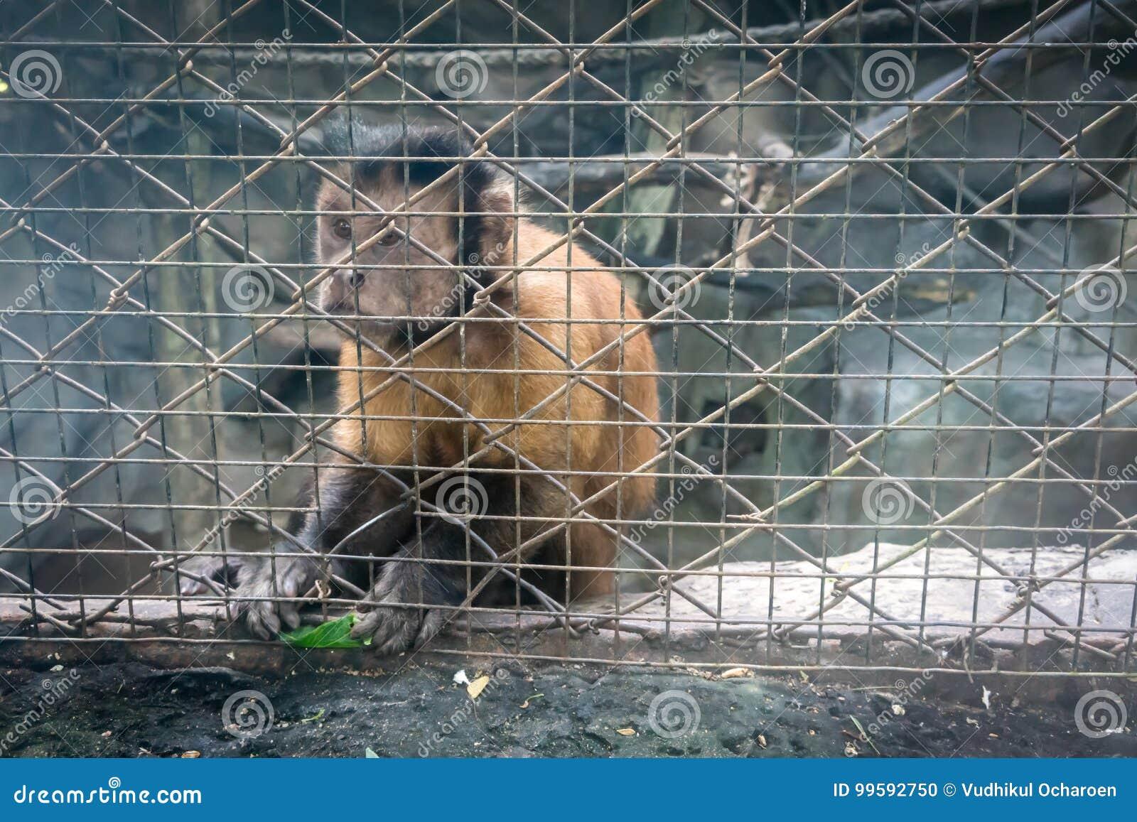Обезьяна сидя в клетке зоопарка