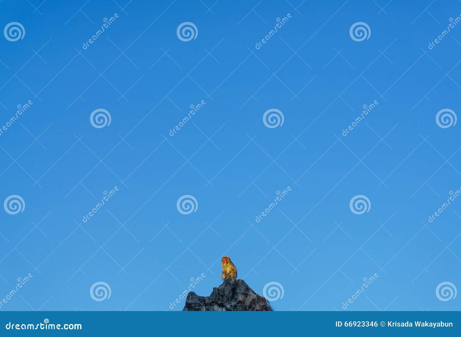 Обезьяна с голубым небом на холме
