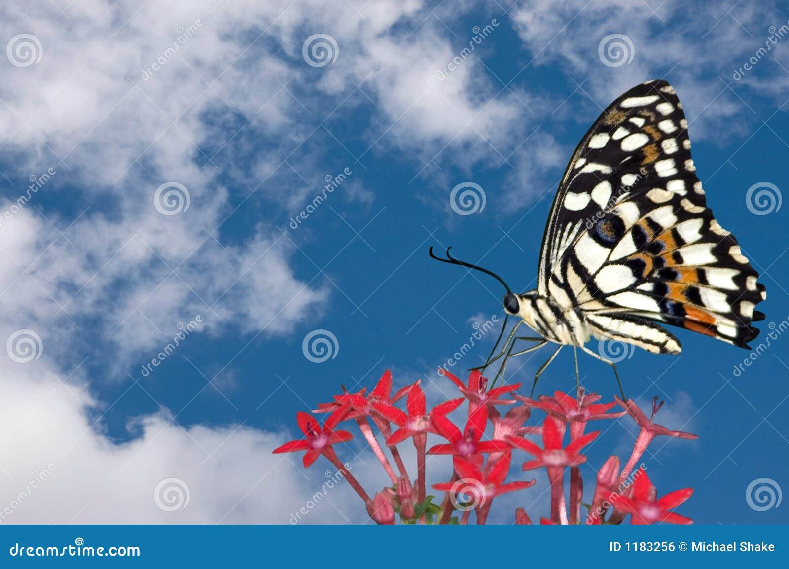 облака бабочки