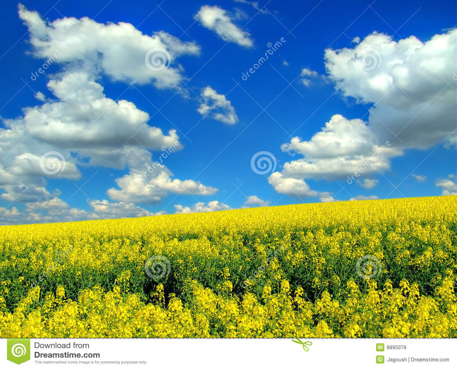 облака field над рапсом